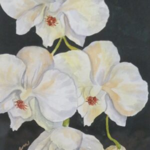 Orchid Beauty by Judy Madren