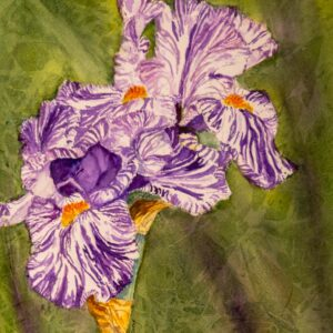 Purple and White Iris by Pat Towery