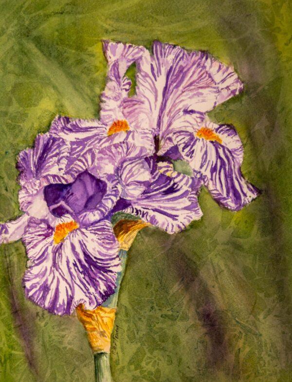Purple and White Iris by Pat Towery